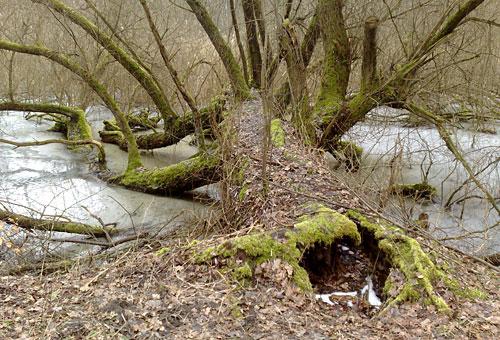 Abgestorbener Baum im vereisten Tümpel