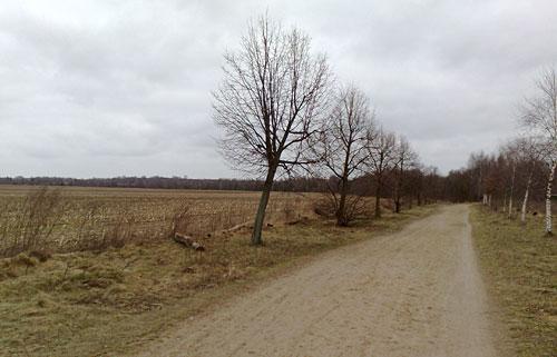 Weg kurz vor dem Berliner Mauerweg