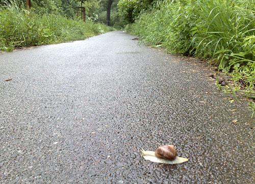 Schnecke auf dem Läufer-Weg