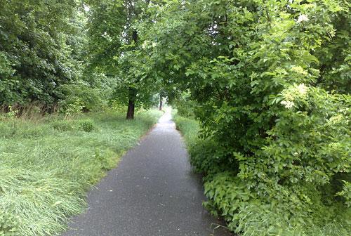 Weg mit nassen Bäumen und Büschen