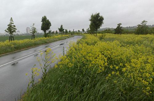 Laufen auf regennassen Straßen