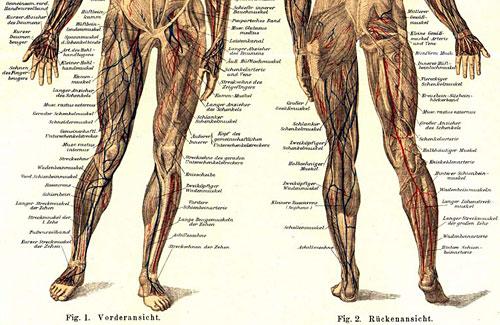 Die Läufer-Muskulatur ist empfindlich