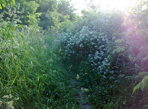 Dichtes Gebüsch versperrt den Laufweg