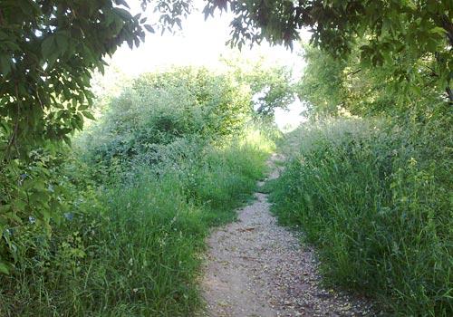 Ein kleiner Traillauf
