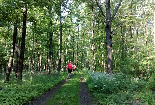 Läufer im sommerlichen Wald