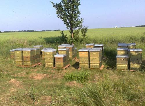 Bienenstöcke am Feldrand