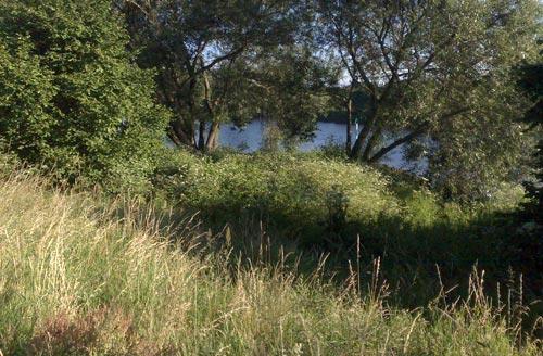 Läufer-Blick durch die Ufer-Vegetation auf die Weser