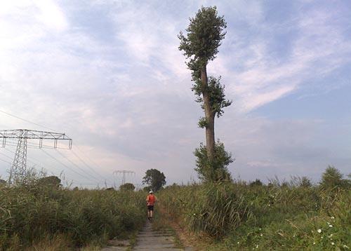 Allein stehender Baum auf dem Weg nach Genshagen