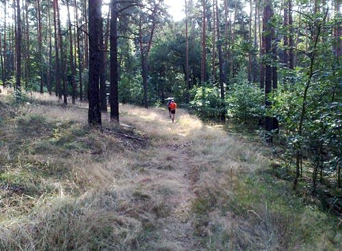Schöne Waldimpressionen für Läufer