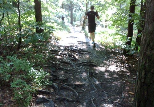 Laufen über Baumwurzeln