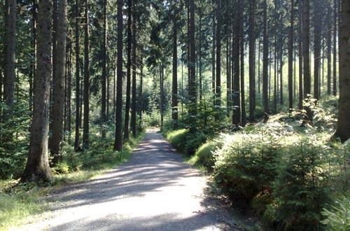 Laufen durch den lichtdurchfluteten Wald