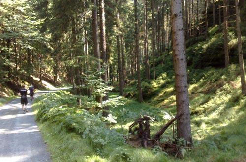 Laufen durch den Nationalpark