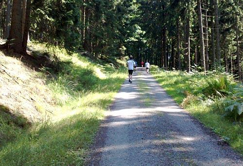 Läufer auf der letzten Steigung beim Nationalpark-Trail