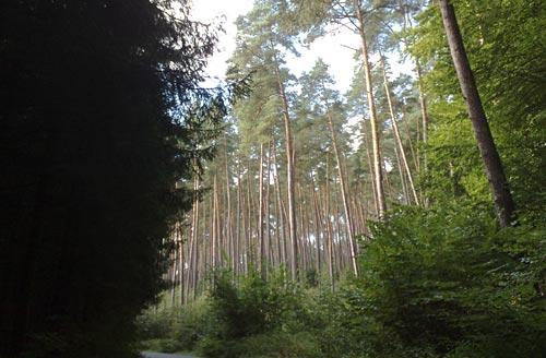 Laufen durch den Wald vor Bellin