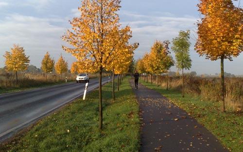 Läufer zwischen herbstlich gefärbten Bäumen