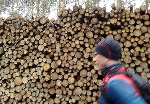 Läufer vor Holzstapel