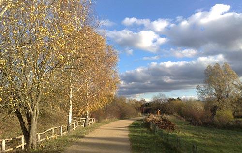 Golden leuchtende Birken vor schönem Wolkenhimmel