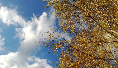 Herbst-Impression: Leuchtende Blätter vor klarem Wolkenhimmel