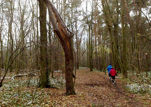 Geknickter Baum im Wäldchen mit Läufern