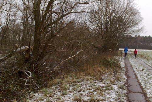 Läufer am Feldrand mit vom Sturm beschädigten Bäumen