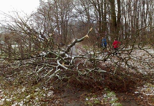 Sturmschäden versperren Läufern den Weg