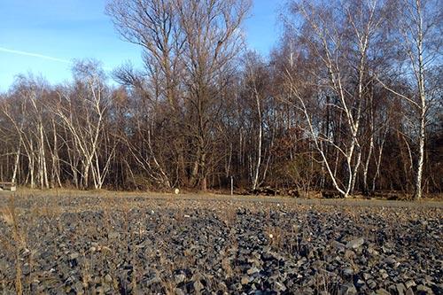 Birkenwäldchen im Park am Gleisdreieck