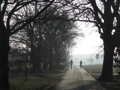 Läufer im morgendlichen Gegenlicht