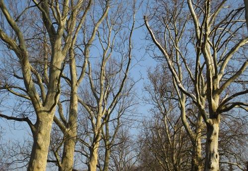 Pappeln im Frühlingssonnenlicht