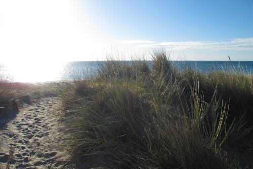 Blick über die Dünen auf das Meer in Dänemark