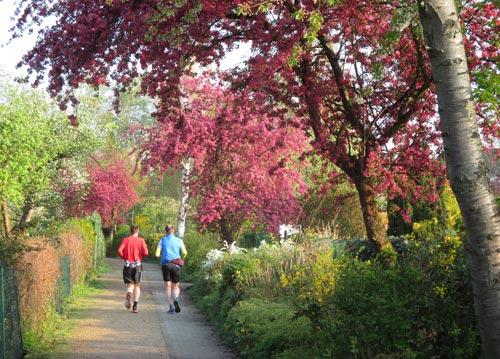 Läufer in Kleingarten-Gebiet mit blühenden Obstbäumen