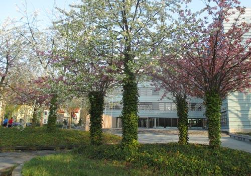 Blühende Obstbäume am S-Bahnhof Attilastraße