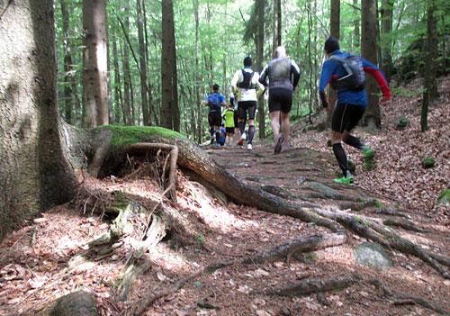 Die Laufstrecke führt über Wurzeln und Steine