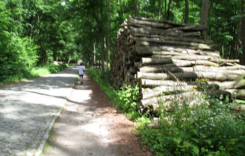 Läufer zwischen Holzstapeln