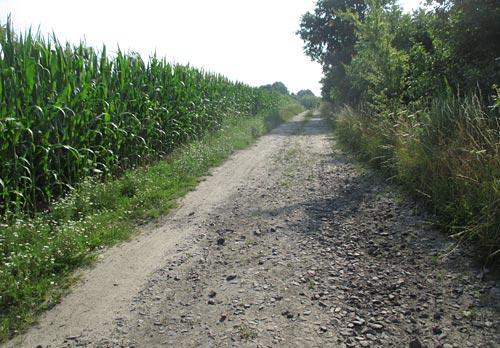 Weg zwischen Bahnlinie und Maisfeld bei Diedersdorf