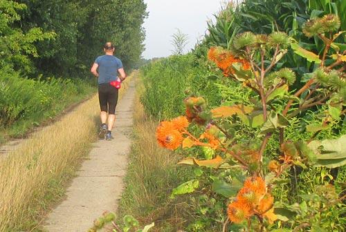 Läufer mit orange angesprühten Kletten