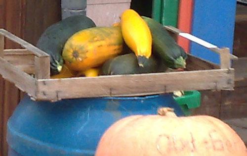 Gelbe Zucchini auf blauer Tonne