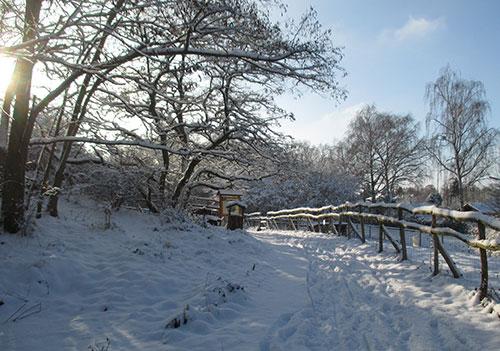 Schnee am Tiergehege