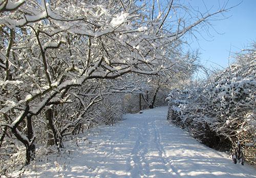 Laufen auf verschneitem Parkweg