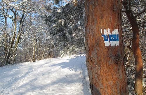 Baum mit Markierung