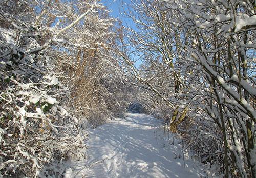 Schmaler Laufweg durch den Schnee bergab