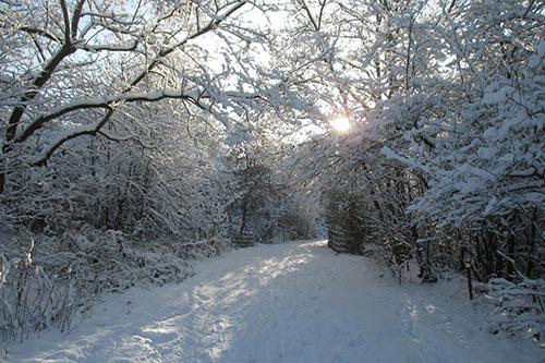 Laufen im winterlichen Freizeitpark Marienfelde