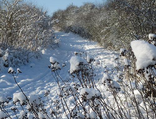Impression vom Lauf durch die Schneelandschaft im Freizeitpark Marienfelde