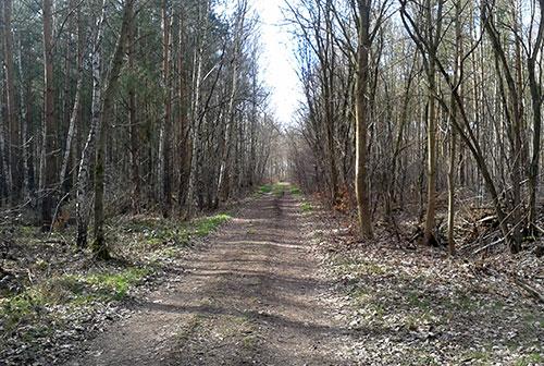 Wald mit einem Hauch von Frühling