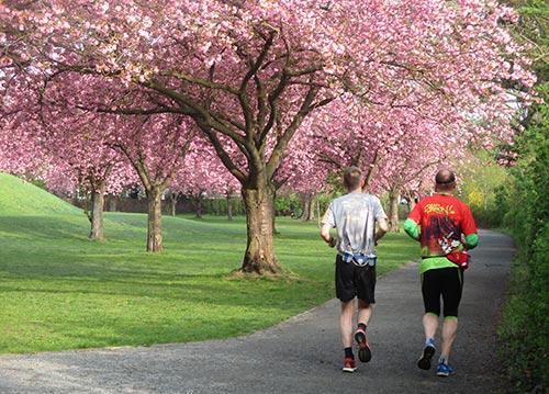 Läufer unter blühenden Kirschbäumen am Lilienthal-Denkmal