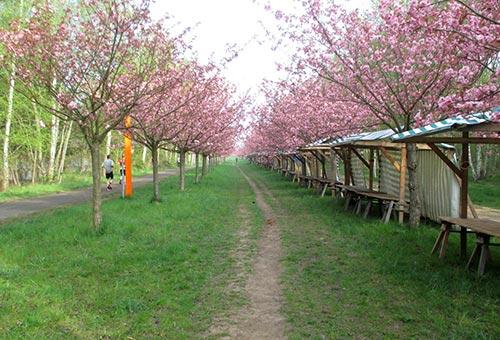 Noch leere Stände beim Hanami Kischblütenfest am Berliner Mauerweg