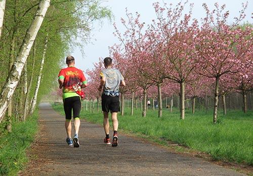 Läufer an der Kirschblütenallee