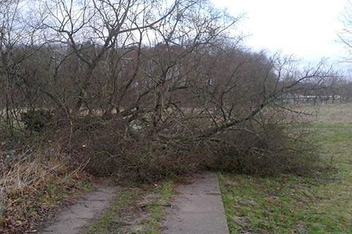 Umgestürzter Baum im Weg