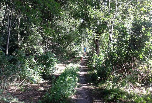 Fast wie im Urwald: Trail-Pfad entlang der Spargelfelder