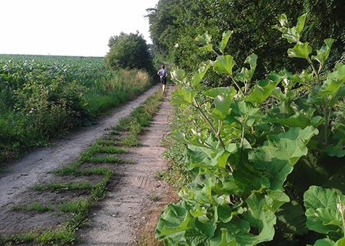 Läufer auf Feldweg nach Diedersdorf
