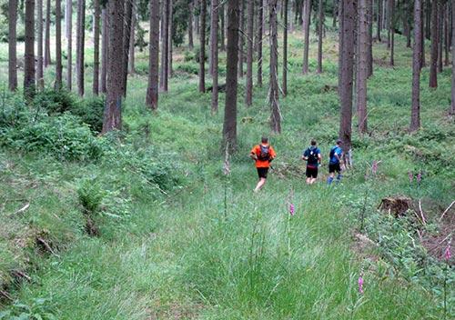 Trail-Läufer